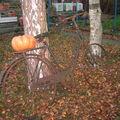 vélo d'automne
