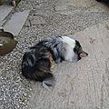 14 04 08 bénévole à la grange : une vie de chien !