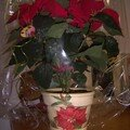 CACHE POT POINSETTIA