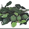 Mousse de maquereau asiatique