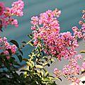 A flowery