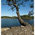 lac de la magdeleine (gujan mestras)