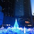 Holly night - christmas illuminations in tokyo