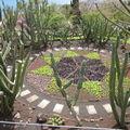 mosaique de succulentes