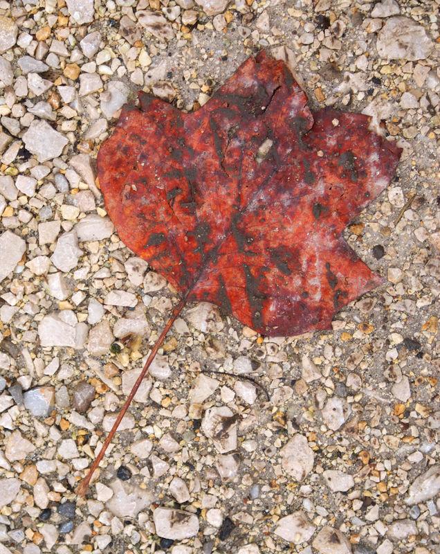 Feuille d'automne (photo novembre 2009)