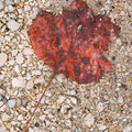Feuille d'automne (photo novembre 2009)