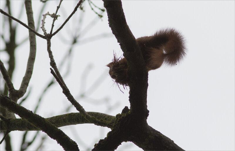 écureuil mousse contrej 2 080417