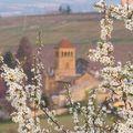 Un clocher aux 1000 printemps