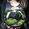 Comment faire un <b>Terrarium</b>