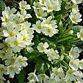 Fleurs 2009 (4)