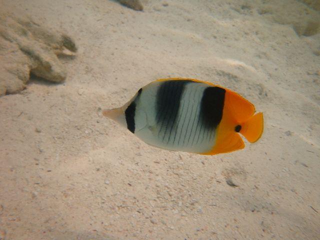 poisson (3)