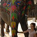 maison des elephants, Jaipur