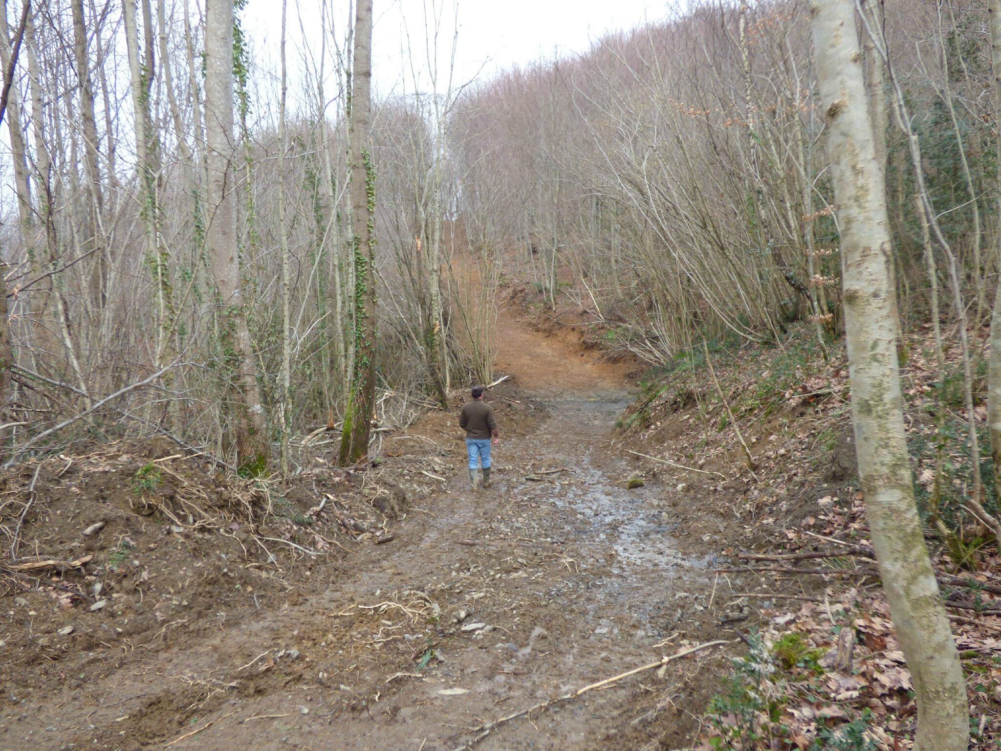 Le désastre en forêt du Bager