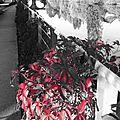 Le rouge et le noir au <b>quai</b> <b>d</b>'<b>Auchel</b> à Rennes le 5 octobre 2014 (4)