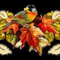 Douceur d'automne