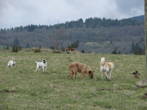 2008 04 10 Nos chiens et ceux des voisins