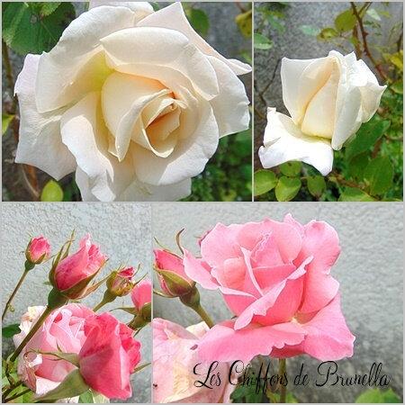 Fleur de mon Jardin 03 06 2