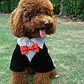 - 50 % Costume de cérémonie pour <b>chien</b> mâle taille XS (réf rch-male)