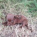 3 bb jetés dans un trou, bouffés par les vers et les mouches à cadavres - une seule a survécu Yska