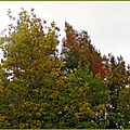 Feuillages automne 0610157