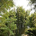 bambouseraie (24)