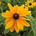 Autres fleurs du parc de wesserling