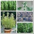 Mélange d'herbes sauvages