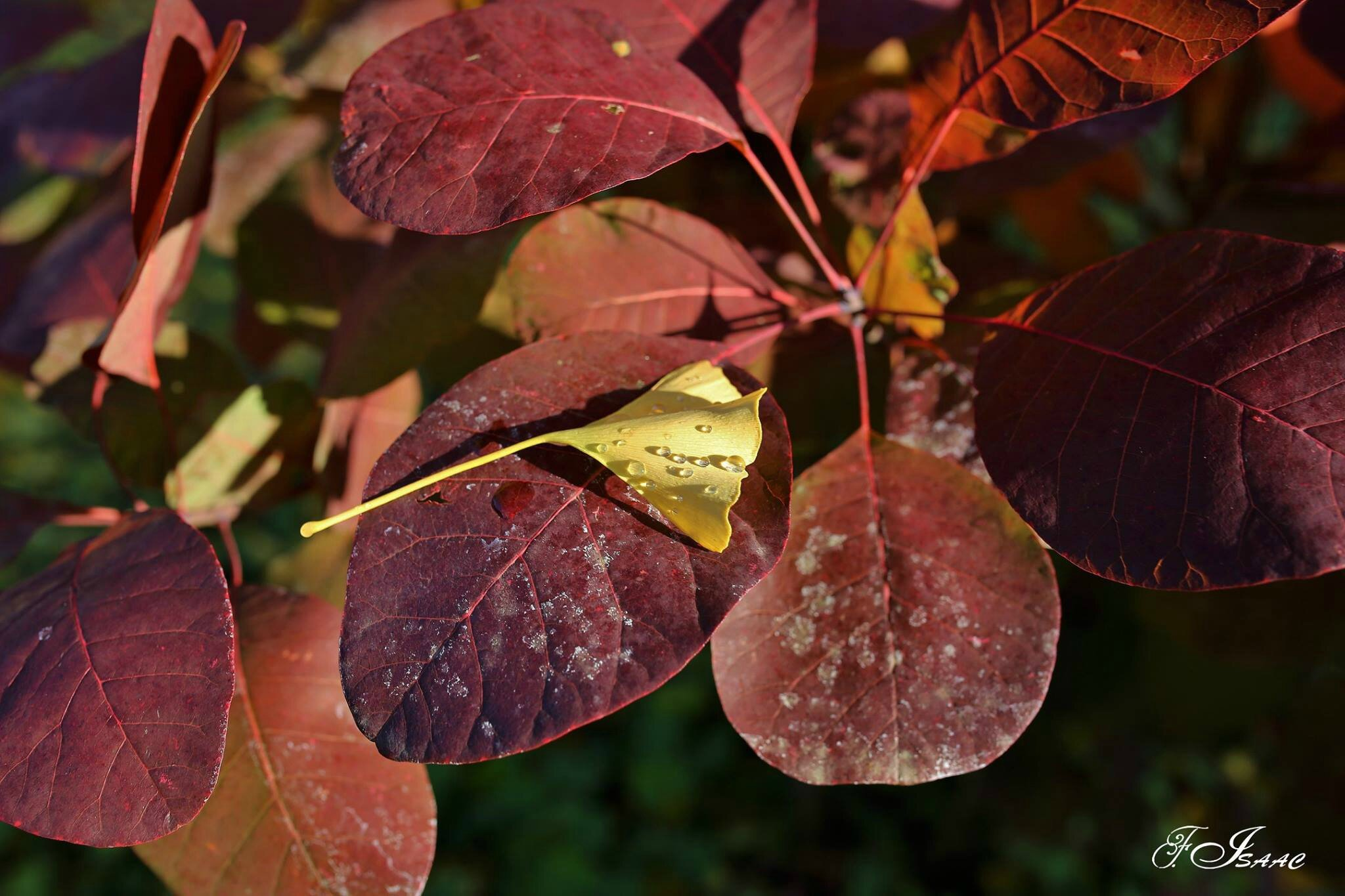 automne dans mon jardin