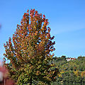 Octobre 2020 - Lac de <b>Marciac</b>