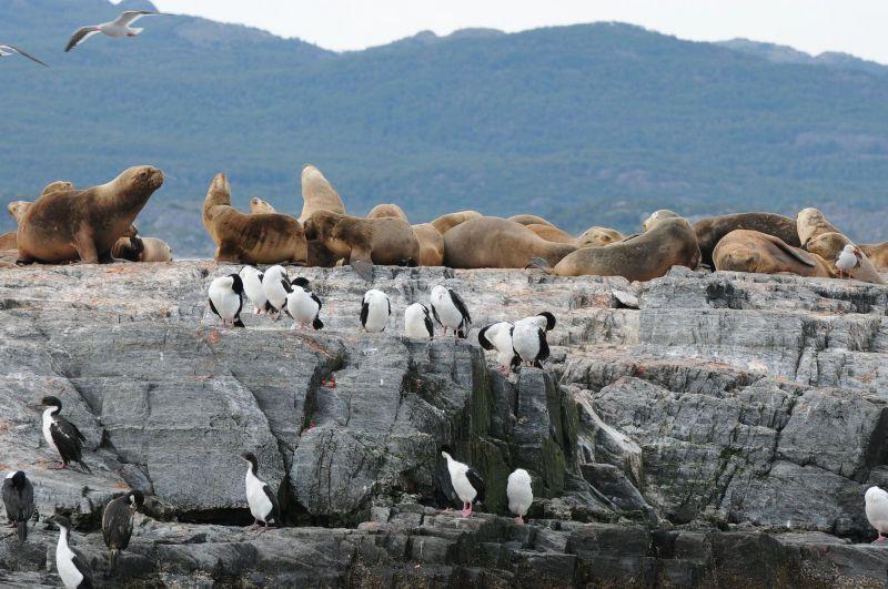 Phoques et cormorans Canal de Beagle