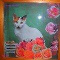 Le chat aux roses