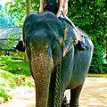 Millenium près de Kandy