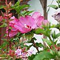 1-Fleurs de Léon et grenouilles 260617