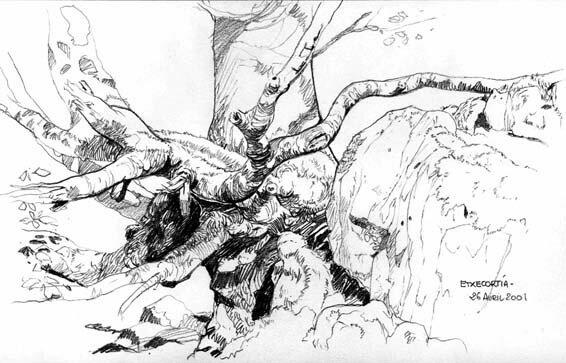 arbre Etxecortia 4 01