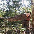 Au cambodge, bois précieux et flics pourris !