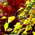 En direct du jardin : les couleurs d'automne !