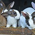 Lapin suite