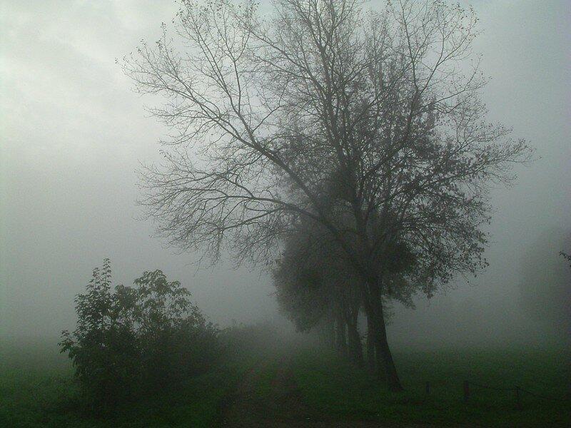 brume sur l'oust_01