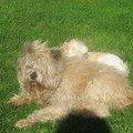 Nugge'ts, Ruby, Murphy dimanche 4 mars 2007 008