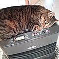 FONZY HOT CAT 😆🤗😊