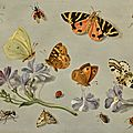 Jan van Kessel the Elder (Antwerpt 1626 - 1679), Butterflies, a moth, ladybird and other insects with a sprig of auricula