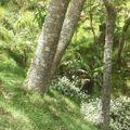 N°27 : la forêt réunionnaise