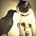 J'ai trouvé mon corbeau