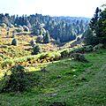 Un jour en forêts d'Aspe Barétous, le 3 octobre 2012...