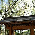 Le joli jardin japonais morikami de delray beach - floride