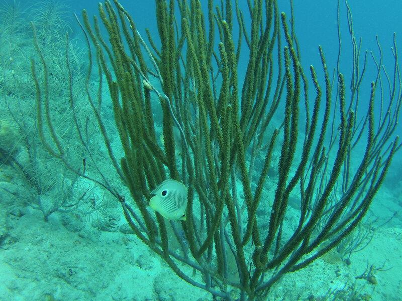 Fon sous marin de Cooper Island (1)