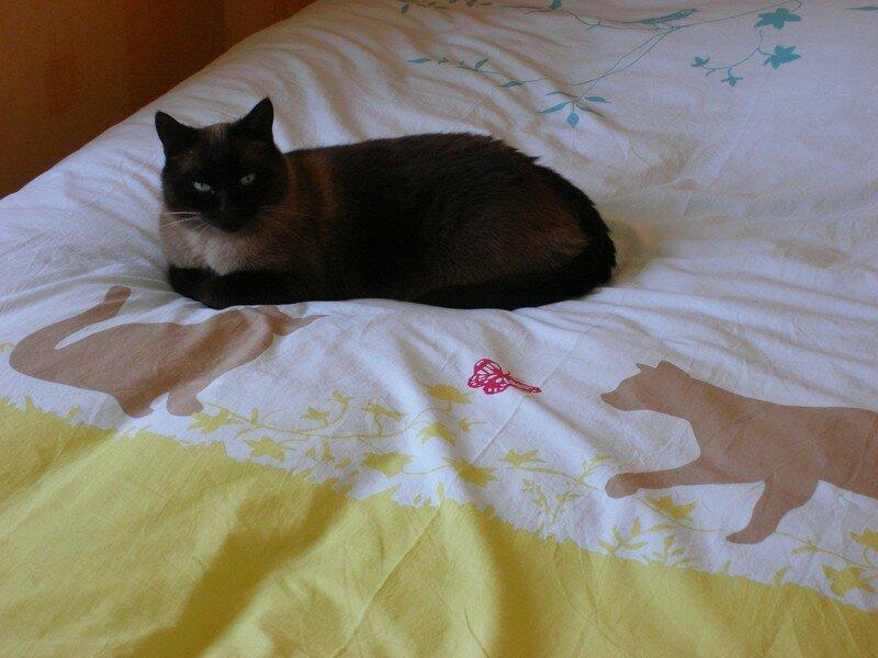 Oscar sur mon lit