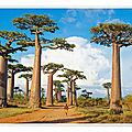 Consigne d'écriture <b>1415</b>-<b>13</b> du 6 janvier 2015 : <b>Baobab</b>