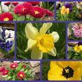 Le printemps dans mon jardin...
