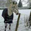 cheval avec manteau